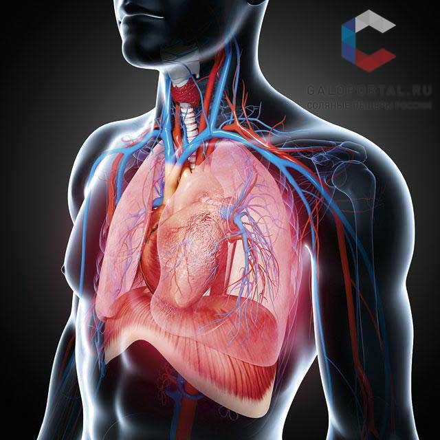 Галотерапия в комплексном лечении больных с патологией органов дыхания в условиях поликлиники
